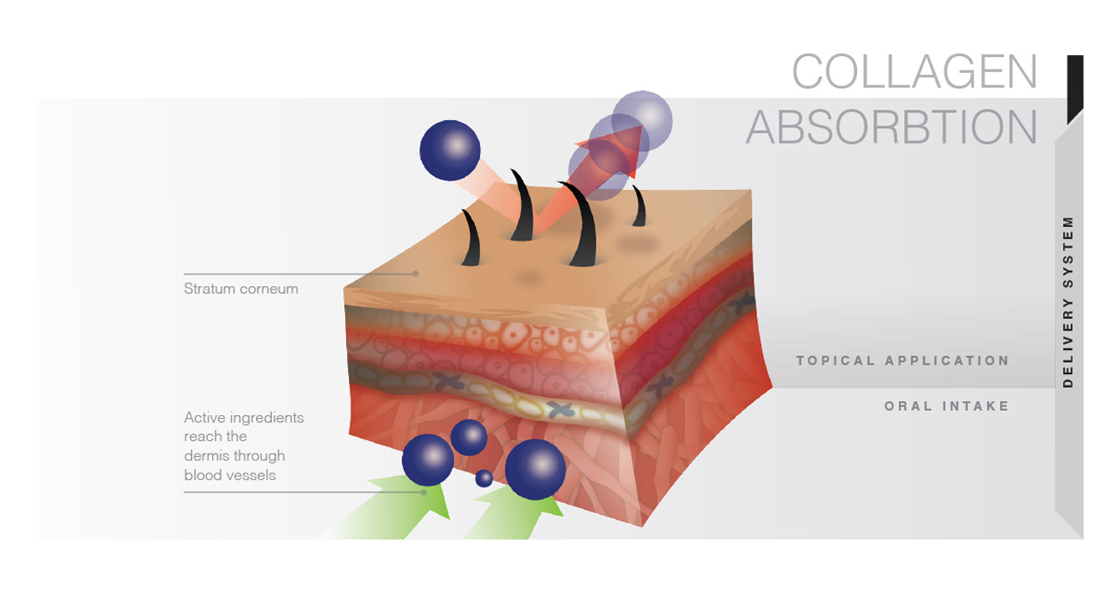 Importance of Having Collagen Drink for Body and Skin